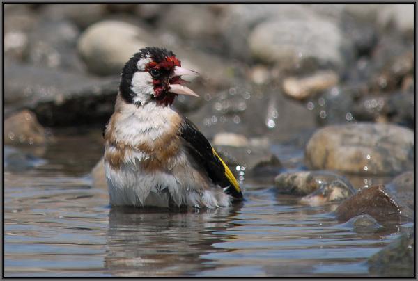 . . . splish, splash . . . !