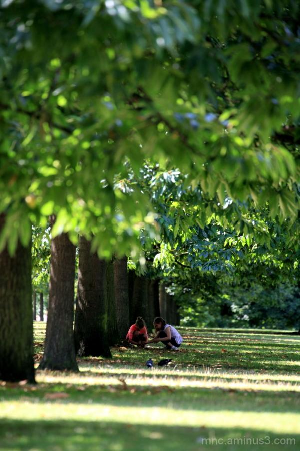 London Park IV