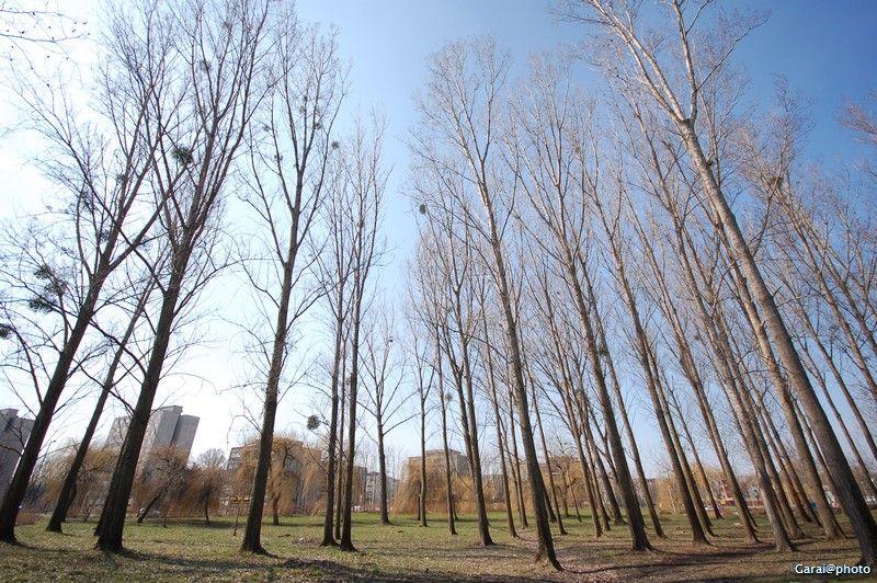 sky-high trees