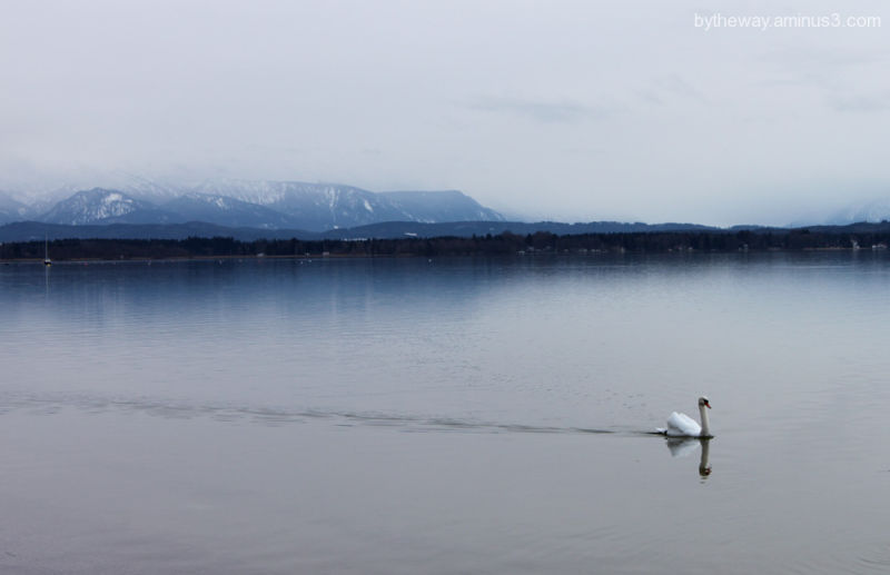 lonesome swan