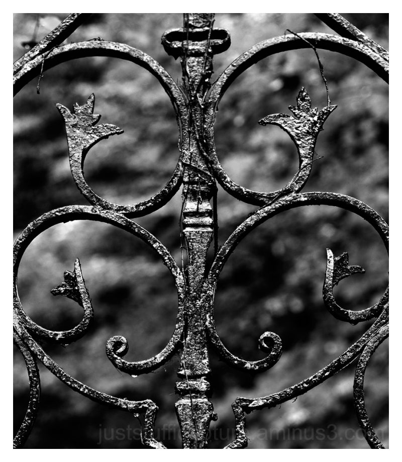 Fence in Black and White