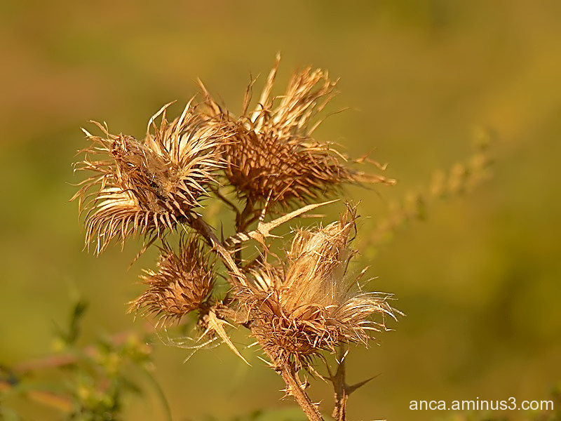 It's time thistles