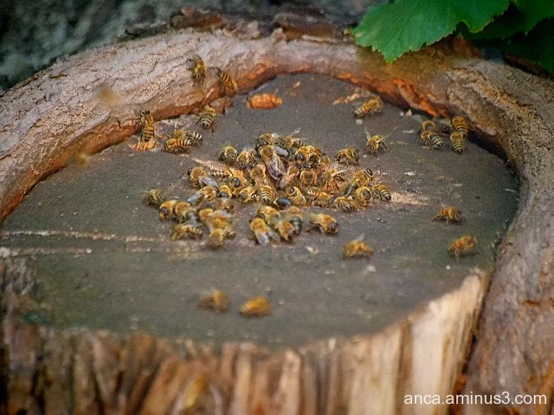 Cuibul de viespi