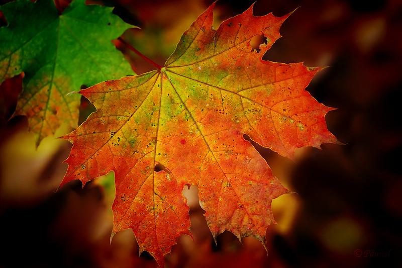 Fall time 4