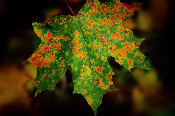 Fall time 7
