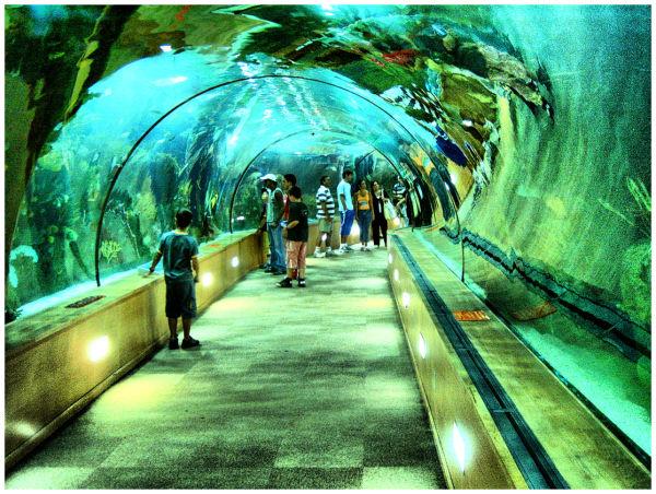 Aquarium - Valencia