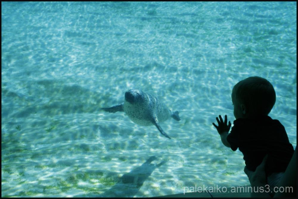 oceanográfico valencia