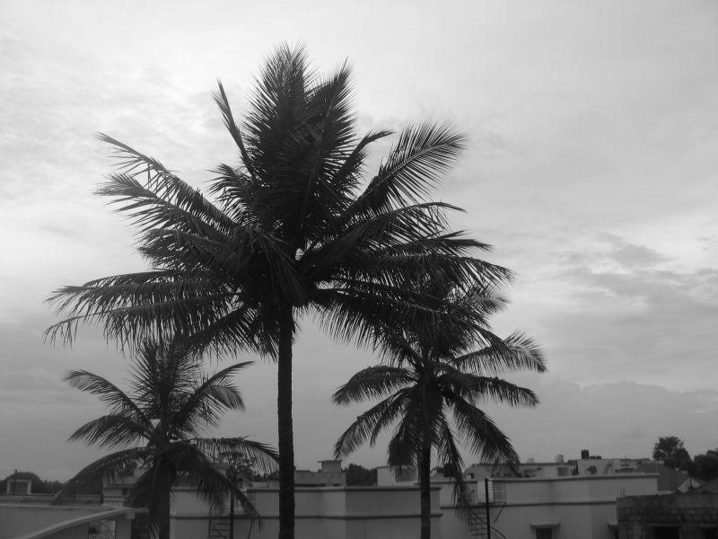 A View from Guddu's Home