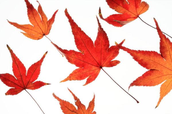 Autumn collection #1