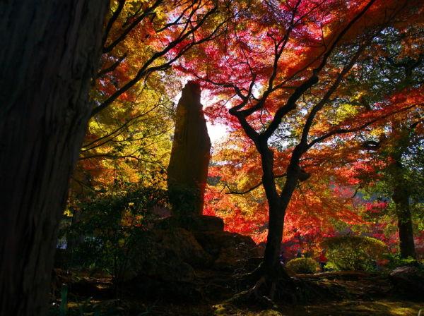 Autumn leaves November 27 #1