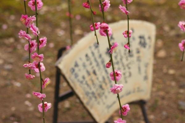 Plum blossom 2011 #4