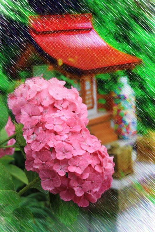 hydrangea in rain #3