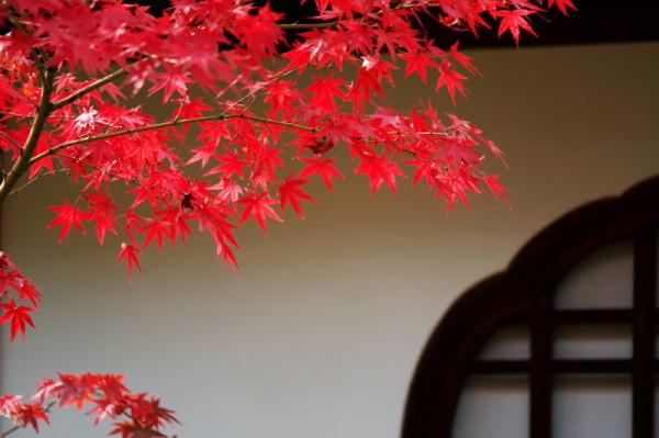 Autumn in Kyoto #2