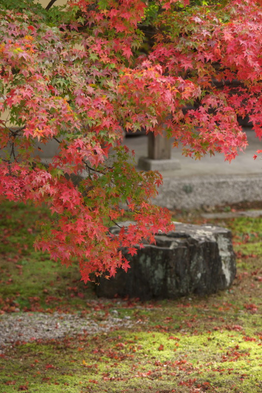 Autumn in Kyoto #3