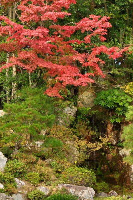 Autumn in Kyoto #9