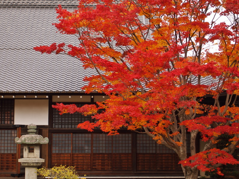 Autumn in Kyoto #23