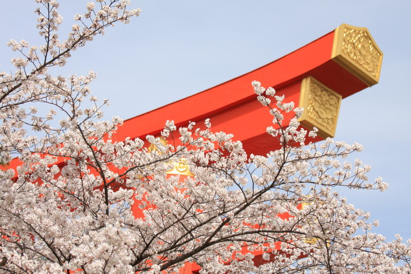 Blossoms and torii