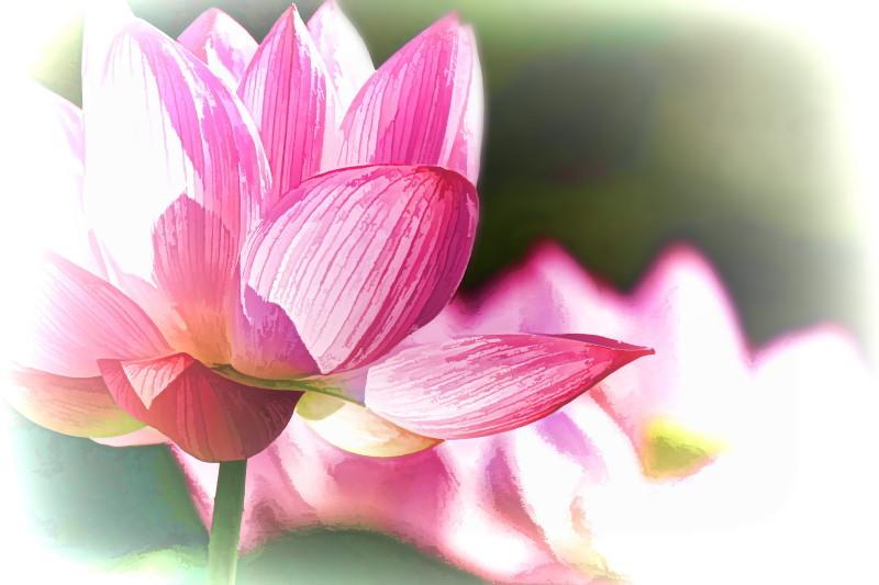 Lotus magic #8