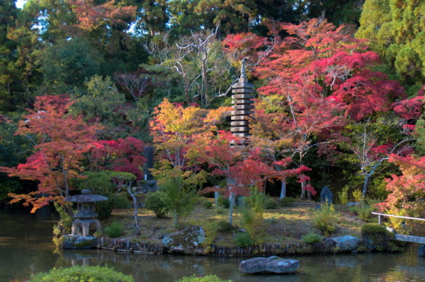 autumn garden #1