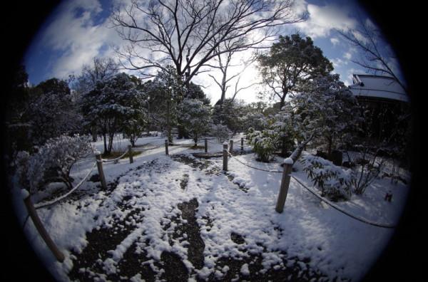 winter garden #4