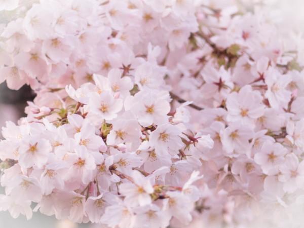 Full bloom !
