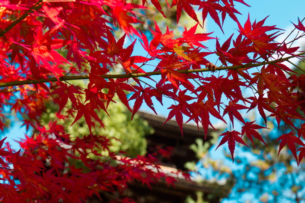 Pagoda and leaves #1