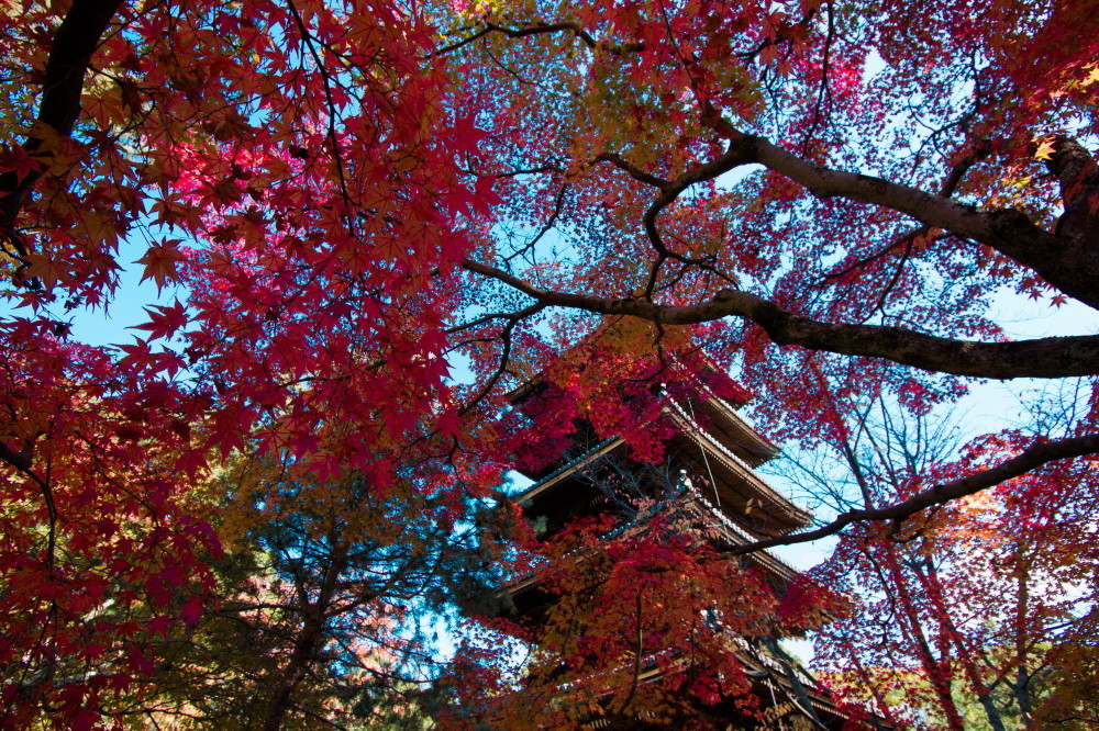 Pagoda and leaves #2