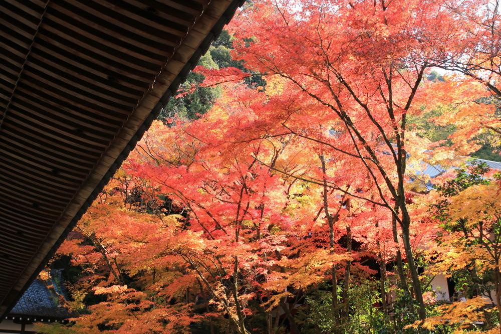 Fabulous colors in November #4