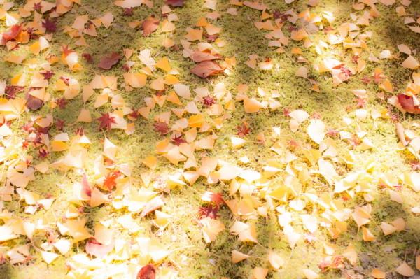 Fabulous colors in November #11