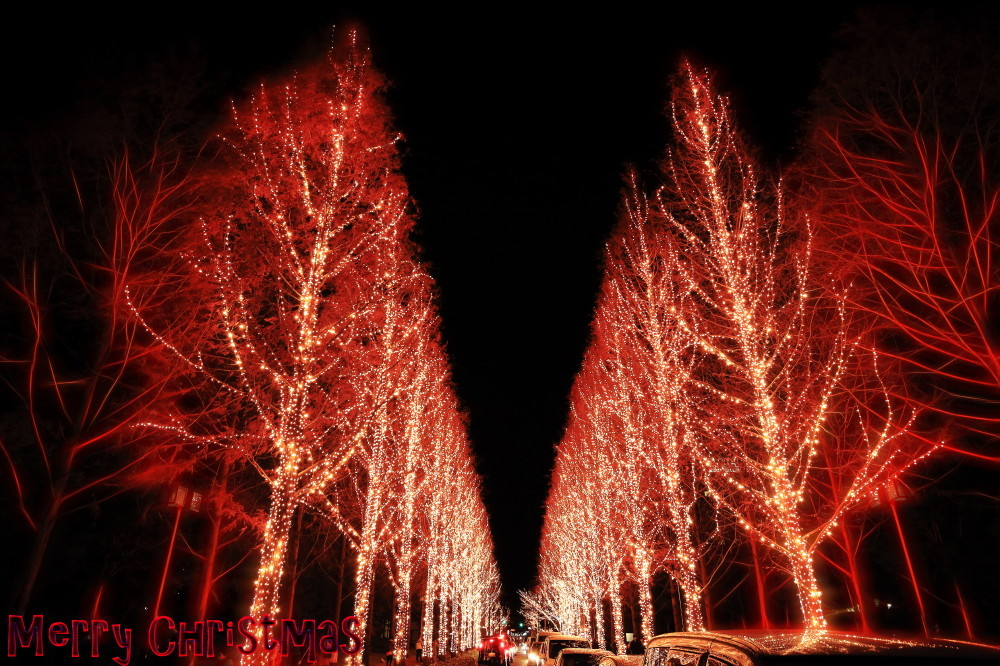 Festive glow #5