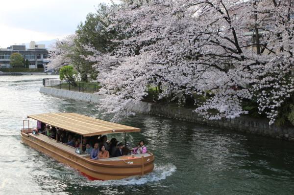 Go under blossoms #1