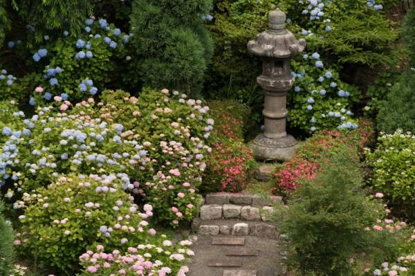 Hydrangea paradise