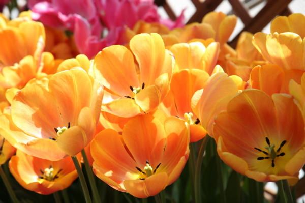 Joy Spring #1