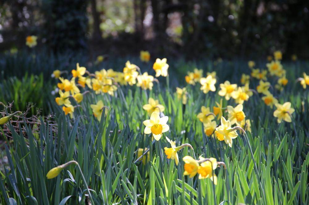 Joy Spring #5