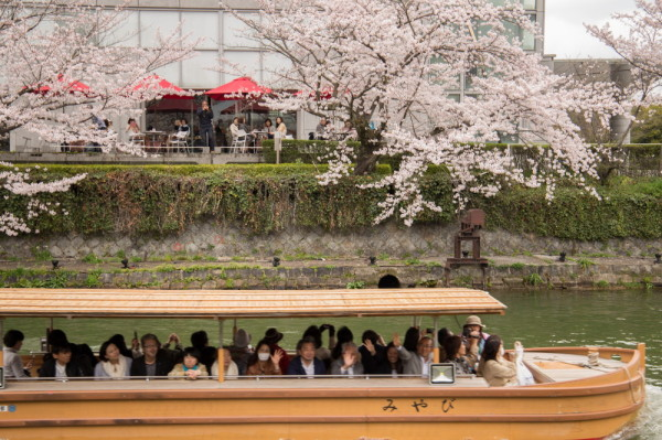 enjoying blossoms on the water
