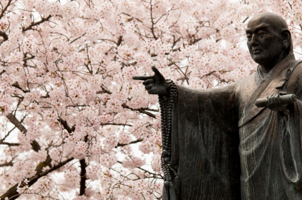 Look at the blossoms the master points.