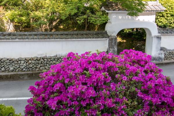 azalea and the gate
