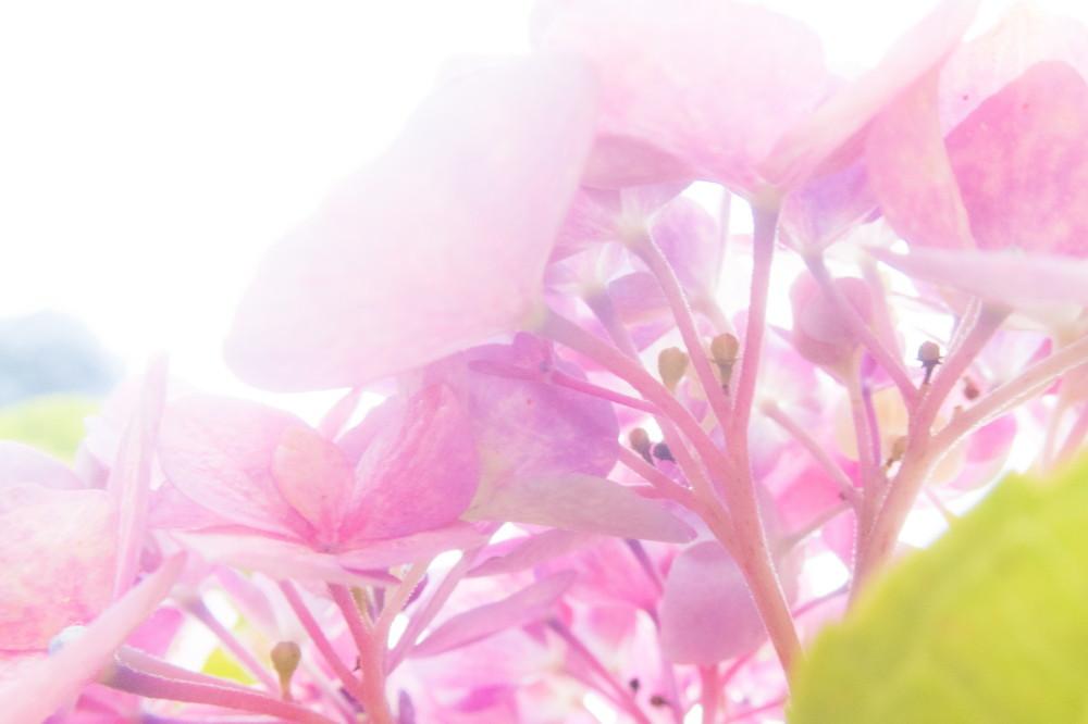 art of hydrangea #2