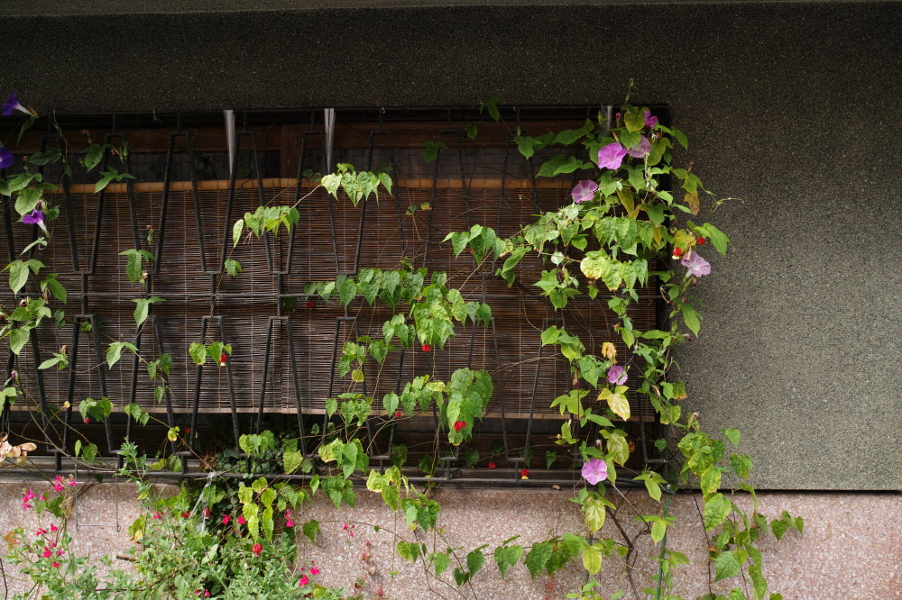 decorated window #1