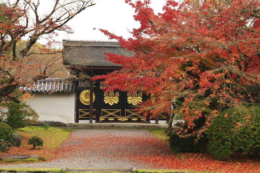 Autumn Splendor #1