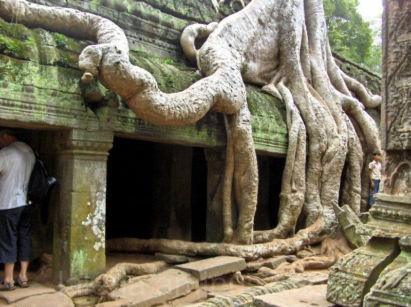 Raíz en Camboya