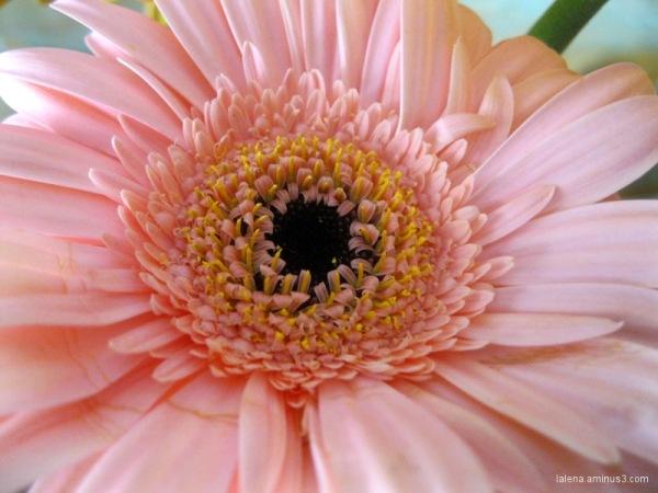 esclat en rosa 2