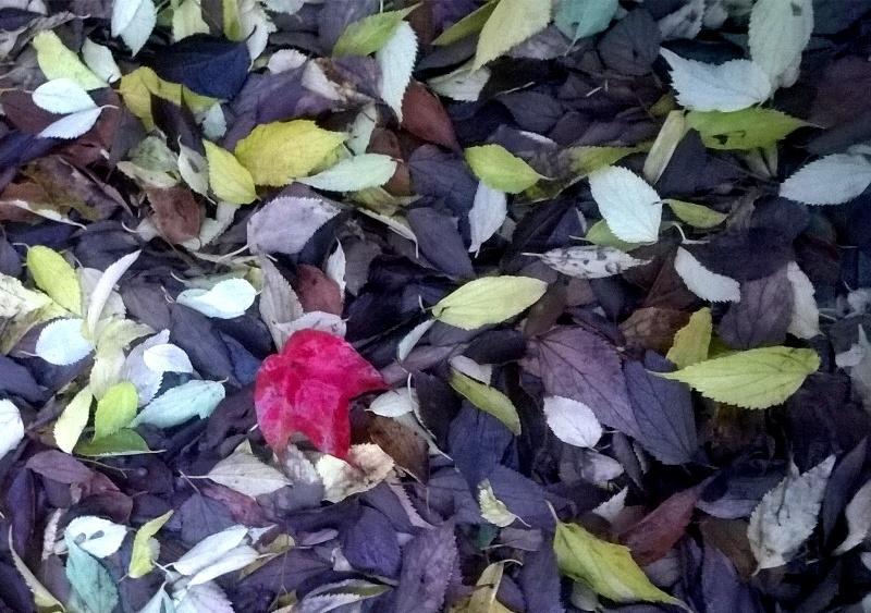 Vermell sobre catifa de fulles de tardor