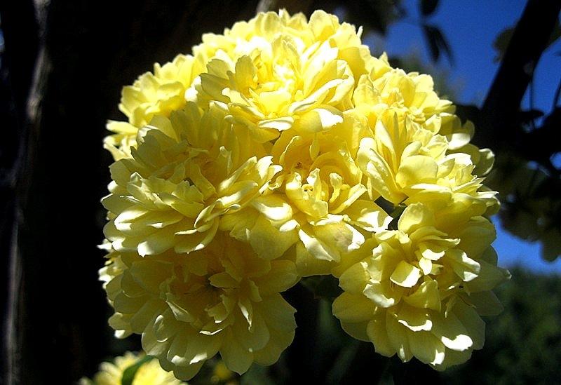 Temps de flors 1