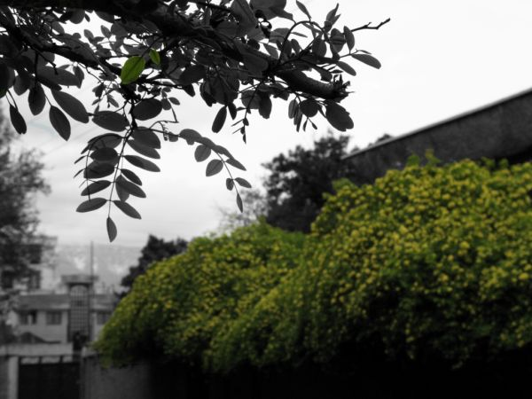 Vali-asr St., Tehran يكي از كوچه هاي وليعصر