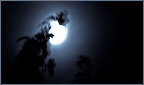 MoonMeetsTrees