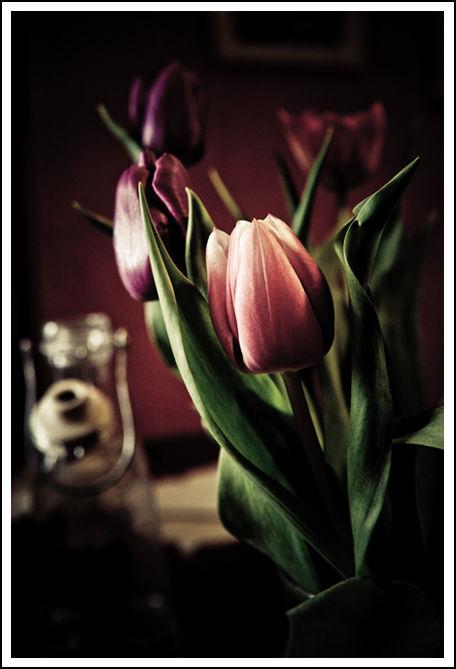 Tulipism