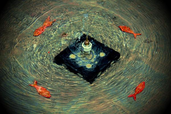 ماهی های قرمز