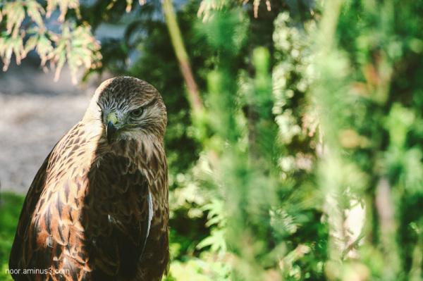 عقاب غمگین