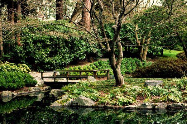 Nitobe Gardens at UBC, Vacnouver, BC